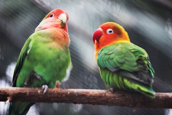 Choosing The Right Parrot Toys For Your Feathered Friend
