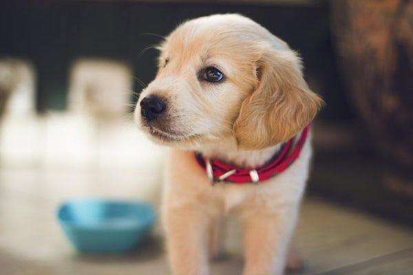 How To Choose The Right Dog Clippers For Your Furry Friend