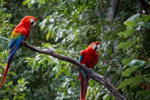 How To Find The Best Vetafarm Bird Food For Your Parrot!