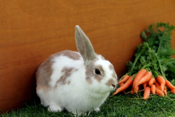 How To Make Sure That The Rabbit Food You Use Is The Best Alternative?