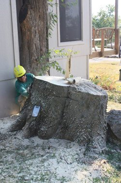 How To Tell Tree Removal And Trimming Is Needed
