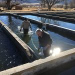 Know Everything About Utah Fish Stocking
