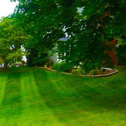 Lawn Care Services Near Me In New York