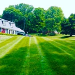 Best Gardener Near Me In Yorktown And Mahopac NY