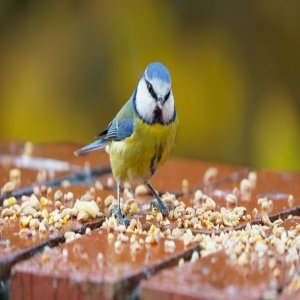 Is The Bird Food The Most Important Factor In Taking Care Of A Parrot?