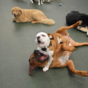 Top Reasons Why You Should Choose Dog Boarding San Marcos For Your Family Dog