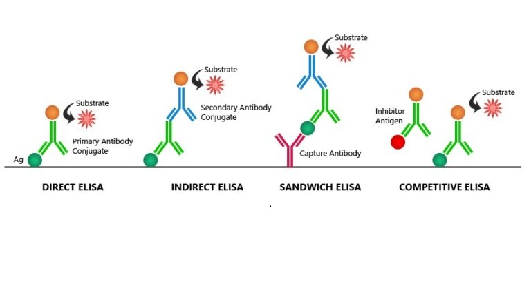 The Brief Explanation Of Elisa Sample Preparation