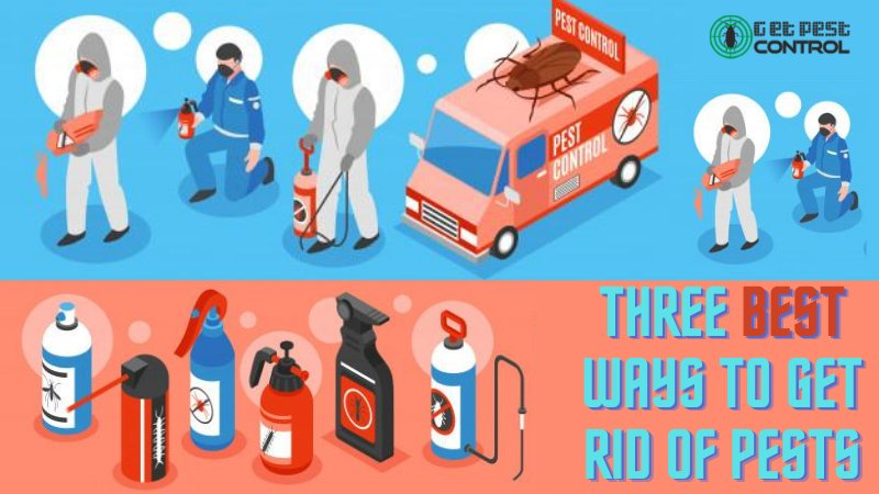Three Best Ways To Get Rid Of Pests In Greater Noida