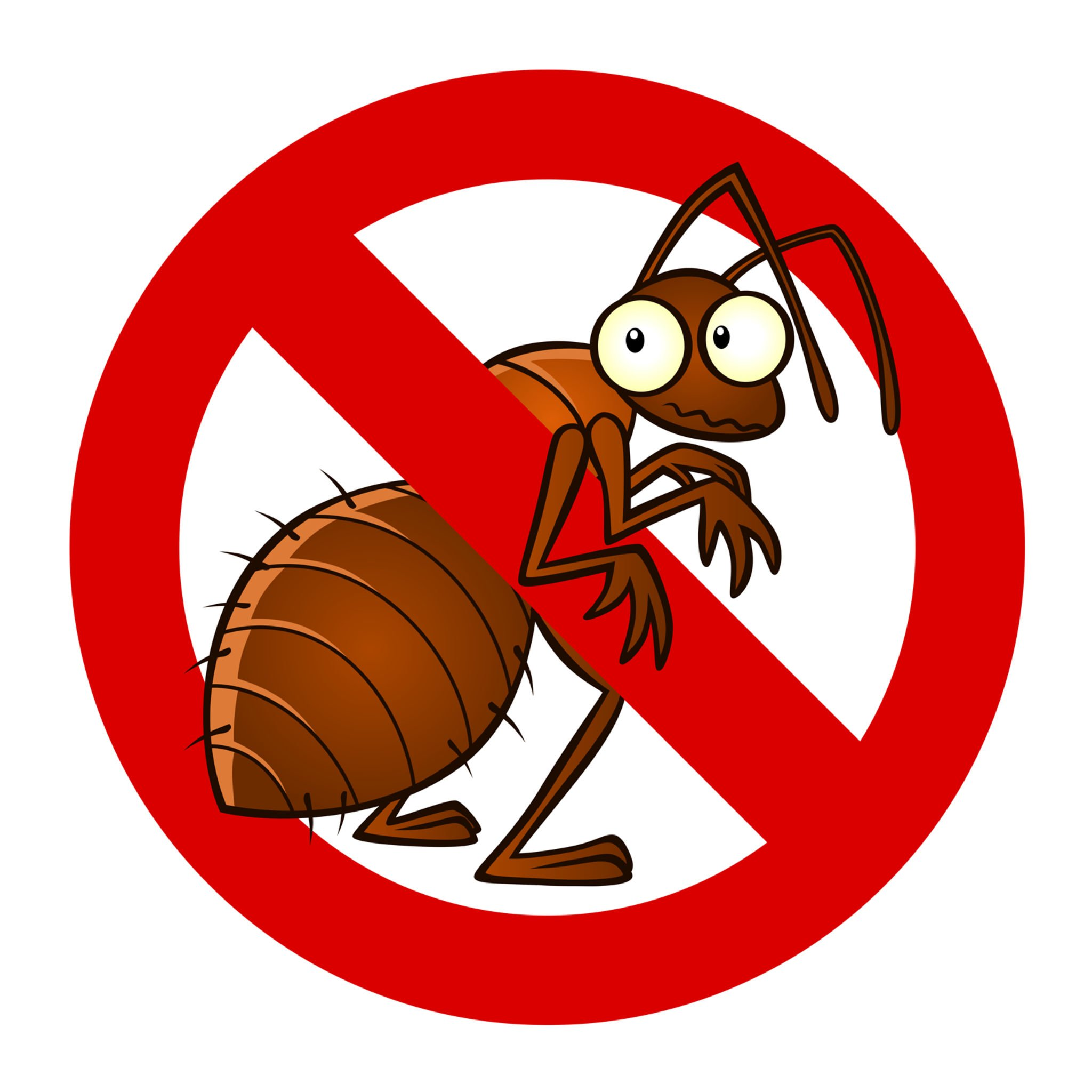 Tips On How To Avoid Unwanted Bed Bug Infestations - Don't Let The Bed Bugs Bite