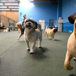 Top Advantages Of Choosing Dog Boarding San Marcos For Your Pet