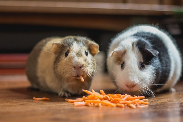 What Is The Best Bird Food And Hay For Your Bird And Guinea Pig?