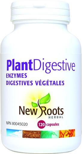 What Is The Importance Of Digestive Enzyme?