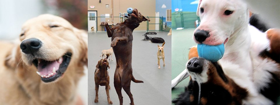Why You Should Join Your Dogs In Dog Boarding Vista When You're Away From Home
